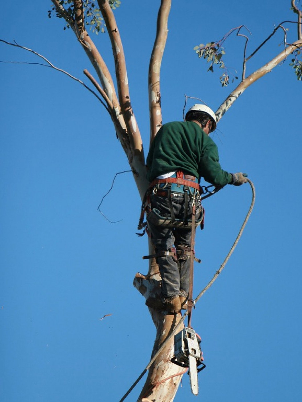 Why Should You Get Professional Tree and Stump Removal Services